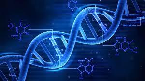 Objectif BAC S - Le brassage génétique par la méiose et la fécondation (4)