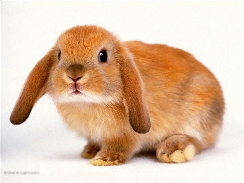 Quel animal adorable et mignon représente la photo ?
