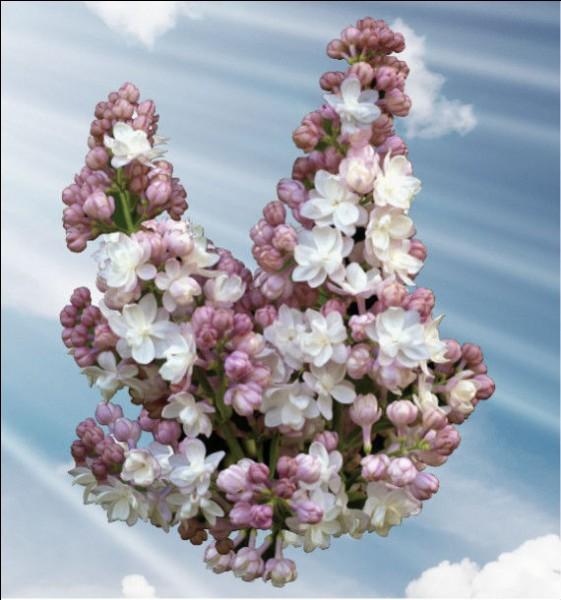 """Qui chantait """"Qu'est-ce qui fait tourner le monde, et refleurir les lilas"""" ?"""