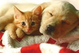 Chien ou chat ?