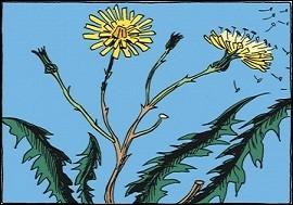 Quant à notre planète Terre, elle contient des organismes vivants en variétés innombrables. Que sont celles présentes sur l'illustration que l'on compte par plusieurs millions ?