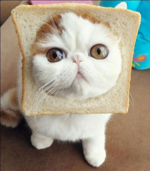 Pour toi, ce chat, il est :