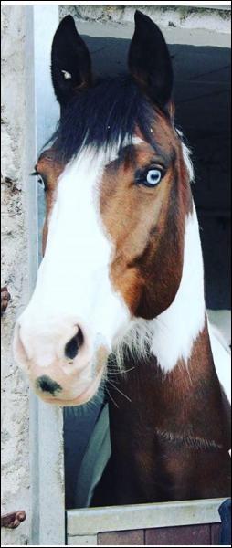 Qui est la star aux yeux bleus ?