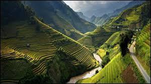 Qu'en est-il de l'hymne national du Vietnam ?