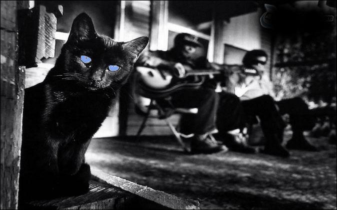"""Qui a écrit le roman """"Blues pour un chat noir"""" ?"""