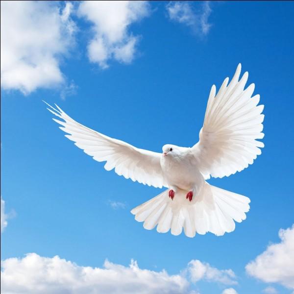 La Colombe - Que symbolise la colombe ?