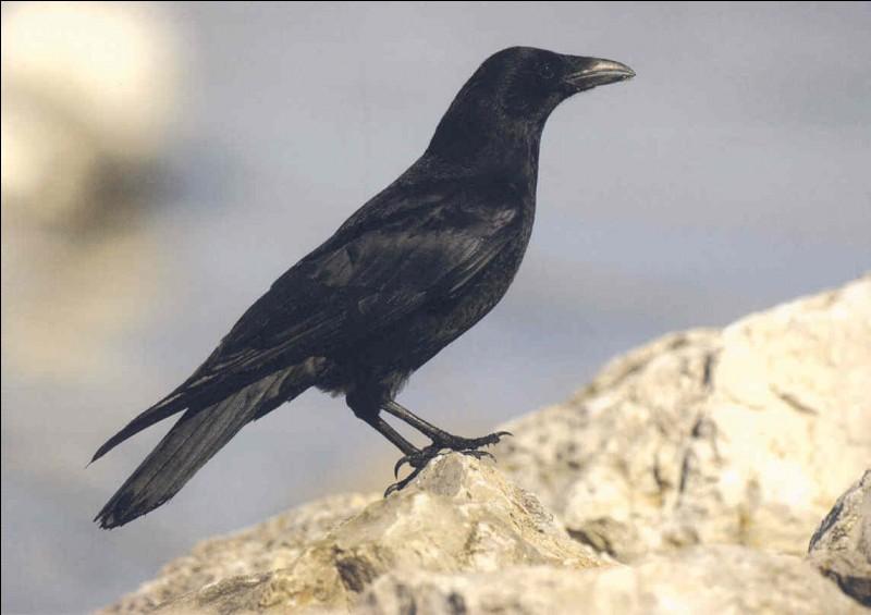 """Le Corbeau - Complétez cette fable de Jean de La Fontaine, """"Le Corbeau et le_____""""."""