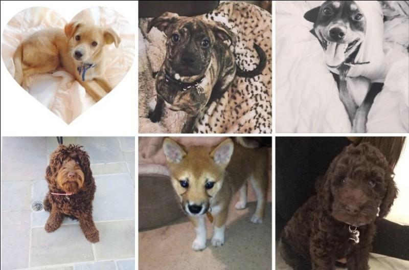 Comment se nomment les 5 chiens d'Ariana ?