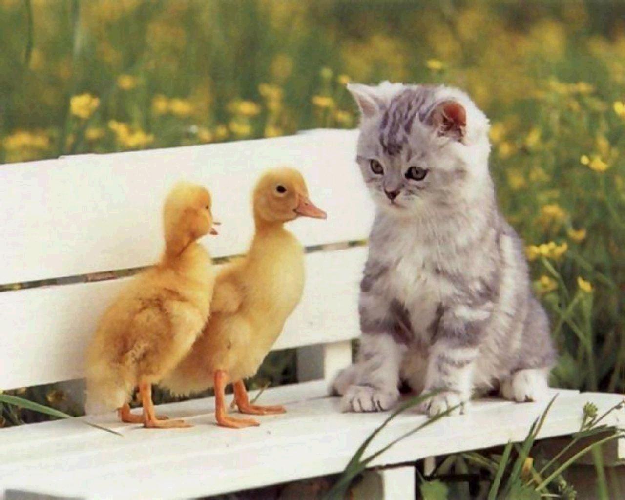 Quel animal de compagnie es-tu ?