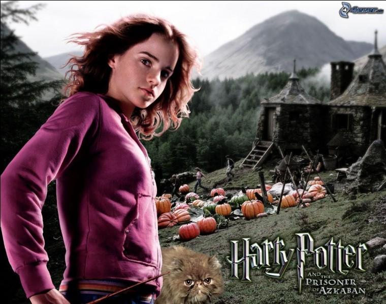 Pendant sa 3e année à Poudlard, Hermione étudie de nombreuses matières mais certaines sont données à la même heure. Que lui donne alors McGonagall pour qu'elle puisse suivre tous ses cours ?