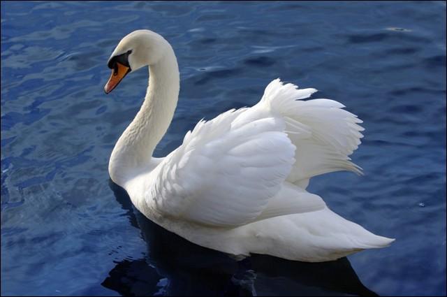 """""""E - C - I - G - N - Y"""" ! Il faut 5 lettres pour écrire le nom de cet oiseau mais tu en as 6. Laquelle vas-tu jeter ?"""