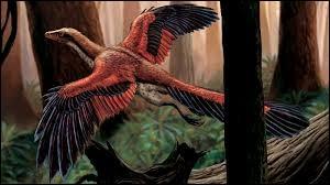 De quel genre est cet oiseau fossile du jurassique, appelé archaeoptéryx ?
