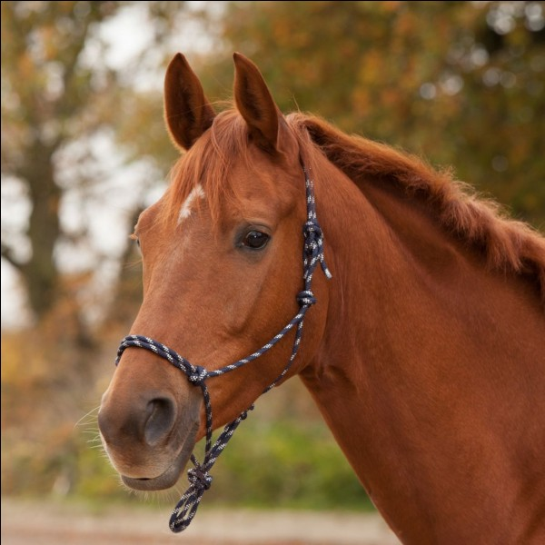 Comment s'appelle ce que porte ce cheval ?