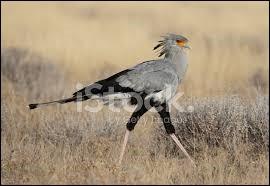 De quelle fonction ce grand oiseau a-t-il hérité son nom ?
