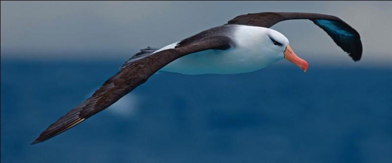 Animaux - Laquelle de ces affirmations concernant l'albatros est fausse ?