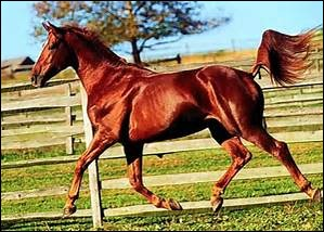 De quelle robe est ce cheval ?
