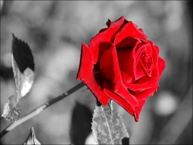 Pour qui cette fleur était-elle importante ?