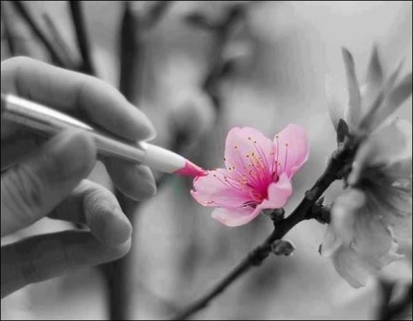 """Qui chantait """"Elle écoute pousser les fleurs"""" ?"""