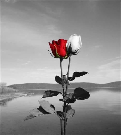 """De quelle oeuvre sont tirés les vers """"Cueillez dès aujourd'hui les roses de la vie"""" ?"""