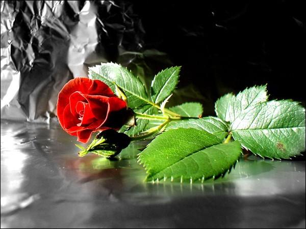 """Qui a écrit """"Le roman de la rose"""" ?"""