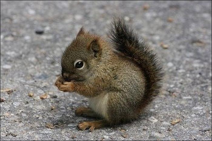 Quel est le nom de cet animal trop mignon ?