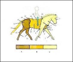 Le cheval est composé de trois parties, lesquelles ?