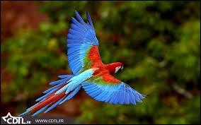 """Complétez les paroles, afin de retrouver la couleur de l'oiseau dans la chanson de Marie Myriam : """"Un oiseau.... survolant la terre"""" :"""