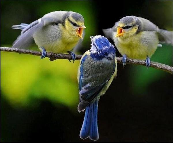 """Qui a écrit """"Les oiseaux se cachent pour mourir"""" ?"""