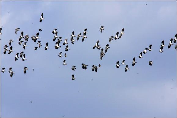 """Dans sa magnifique chanson """"La montagne"""", quel vol d'oiseaux Jean Ferrat décrit-il ?"""