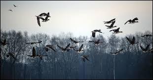 Sur quel oiseau Nils Hollgersson s'envole-t-il vers de belles aventures ?