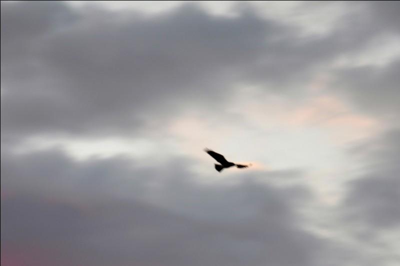 """Qui chantait """"Dis l'oiseau, oh dis emmène-moi, retournons au pays d'autrefois..."""" ?"""