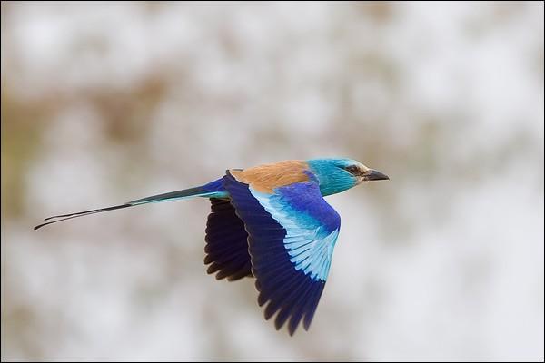 """Qui chantait """"Fais comme l'oiseau, ça vit d'air pur et de pêche un oiseau, mais jamais rien ne l'empeche l'oiseau, d'aller plus haut"""" ?"""