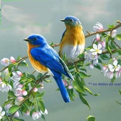 On s'envole en culture générale, avec les oiseaux !