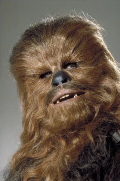 À quelle espèce appartient Chewbacca ?