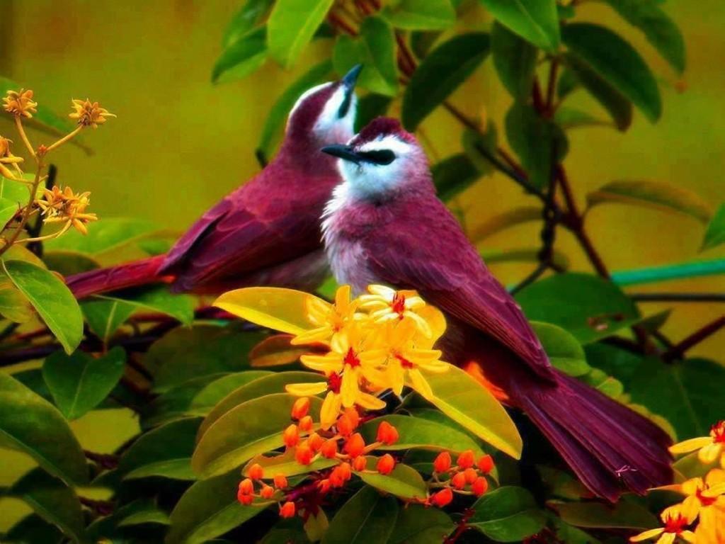 Quizz les oiseaux vous en font voir de toutes les couleurs for Oiseau couleur