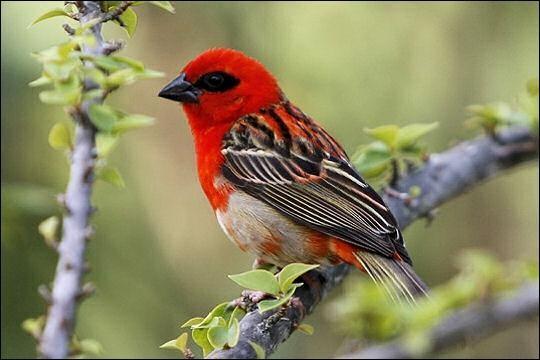 Trouvez l'oiseau rare en culture générale !