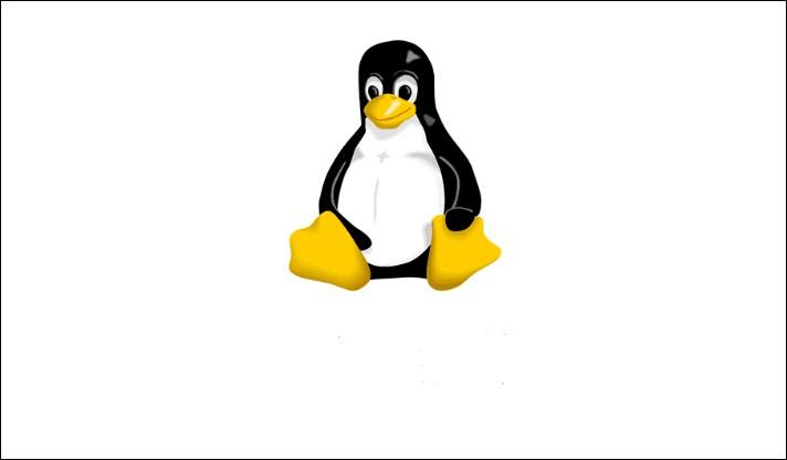 logo quiz pingouin