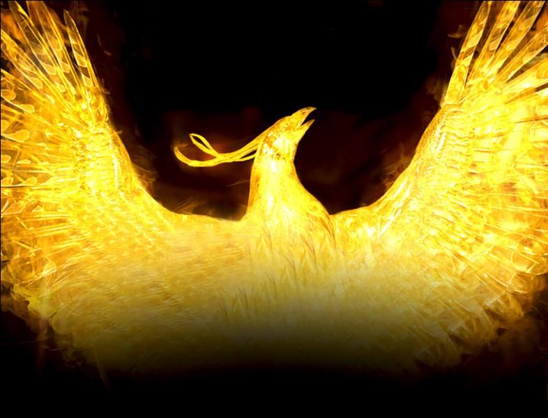 Ce majestueux oiseau est celui de la marque de bière...