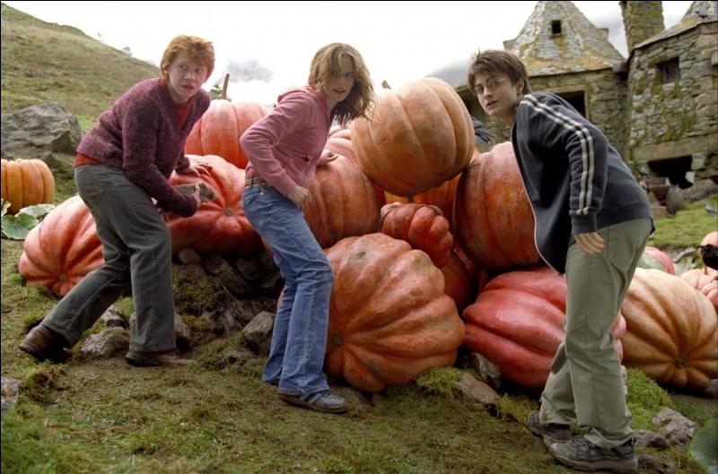 """Dans """"Harry Potter et le prisonnier d'Azkaban"""", qui Hermione a-t-elle failli voir lors de cette scène chez Hagrid ?"""