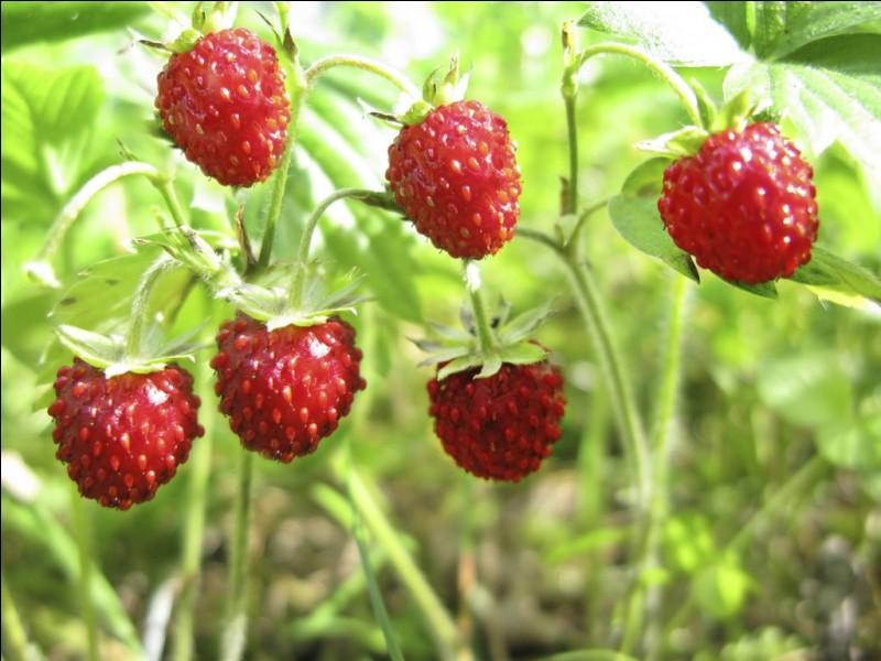 """Comment dit-on """"la fraise"""" en anglais ?"""