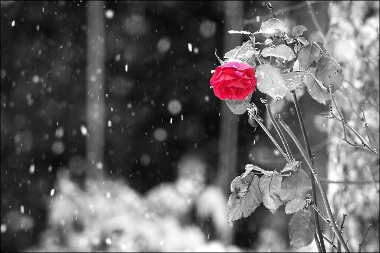 """A qui sont les paroles """"J'ai vu la foule et les silences, les feux de joie et les souffrances, j'ai vu les roses sous la neige et les grands loups blancs pris au piège"""" ?"""