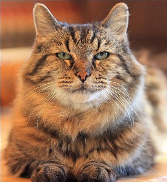 """Traduire le mot """"chat"""" en anglais."""