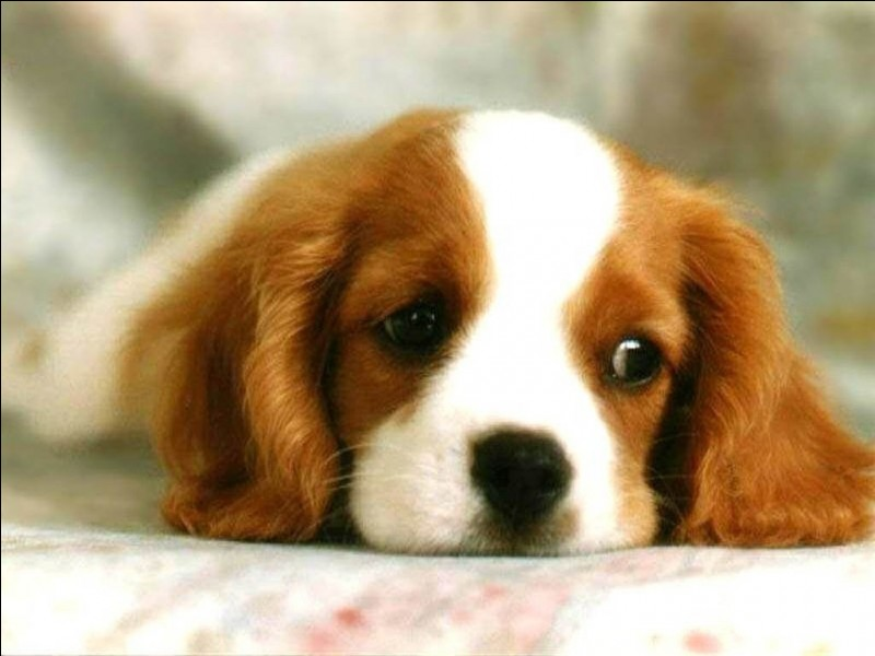 """Traduire le mot """"chien"""" en anglais."""