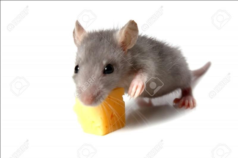 "Traduire le mot ""souris"" en anglais."