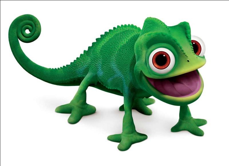 De quelle couleur est Pascal ?