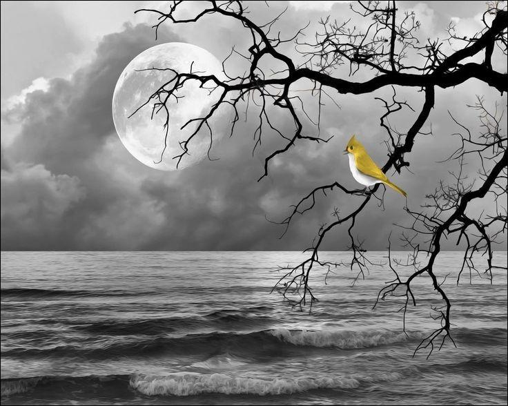 Selon un vieux proverbe, quel oiseau ne fait pas le printemps ?