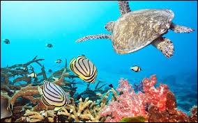 """Qui a écrit """"Vingt mille lieues sous les mers"""" ?"""