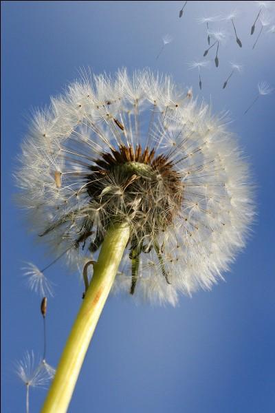 Il disperse les graines et est représenté par Éole.