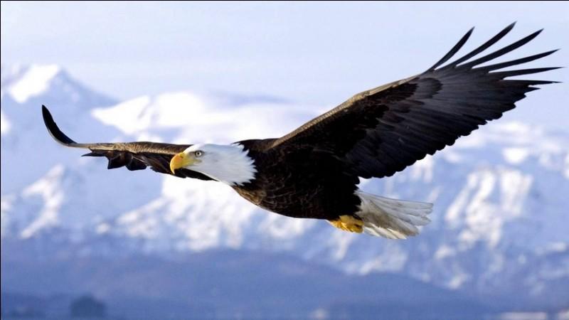 Quelle taille aimerais-tu faire si tu étais un oiseau ?