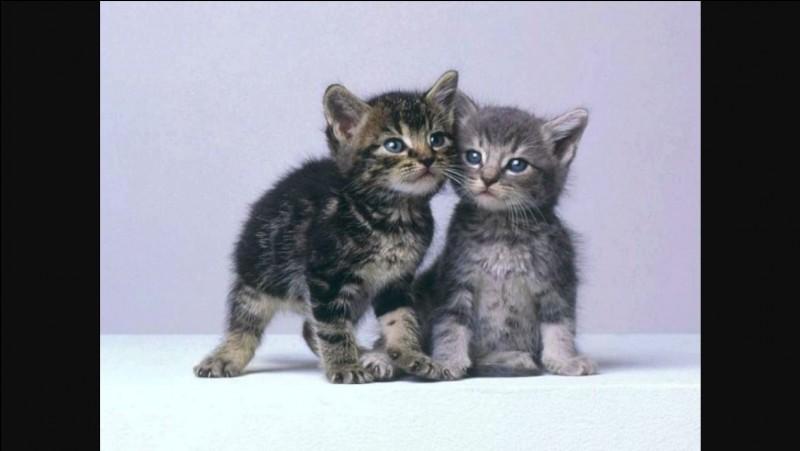 Quel était le nom de chaton de Jolie Plume ?